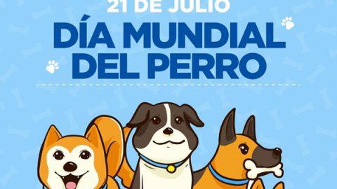 Invita Municipio a atender mascotas caninas