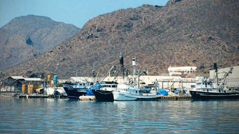 Sardineras contaminan el mar de Cortés