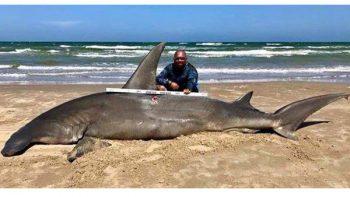 Atrapan un enorme tiburón martillo en la Isla del Padre