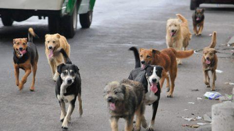Recorre el país en búsqueda de perros abandonados