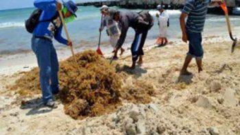 Sargazo invade las playas de Quintana Roo