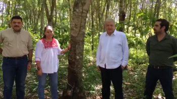 AMLO avanza en proyecto de sembrar un millón de hectáreas de árboles