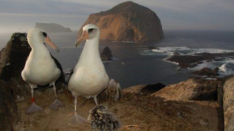 Aves marinas bajo amenaza en santuario de Baja California