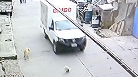Muestran supuesta camioneta Bimbo atropellando a un perro