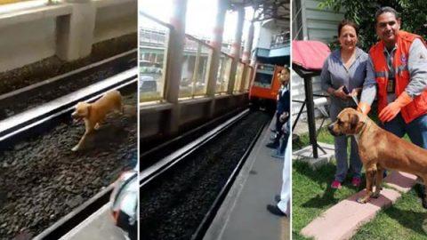 Captan en video a perrito sobre vías del Metro Impulsora