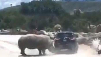 ¡Terror! Graban a rinoceronte embistiendo camioneta en Africam Safari