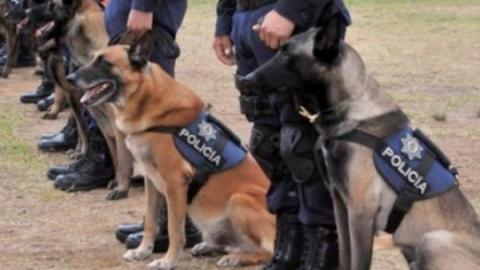 Jubilan a 13 elementos caninos son de la Policía en Querétaro