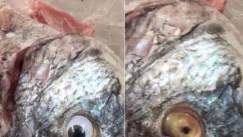 Vendían peces con ojos falsos para hacerlos ver frescos