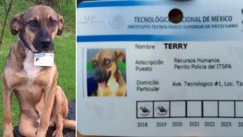 Tec de Pátzcuaro adopta perros callejeros y los convierte en perros policía