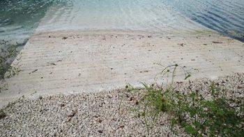 Clausuran predios por tala y remoción de vegetación en Quintana Roo