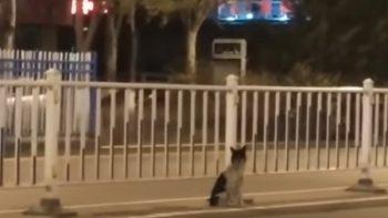 Perro espera a su ama en el lugar donde murió atropellada (VIDEO)