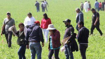 Alrededor de 200 pobladores buscan restos en Tlahuelilpan, Hidalgo