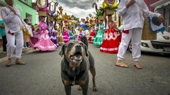 Adoptan a 'Mazapán', el perro más famoso de Oaxaca