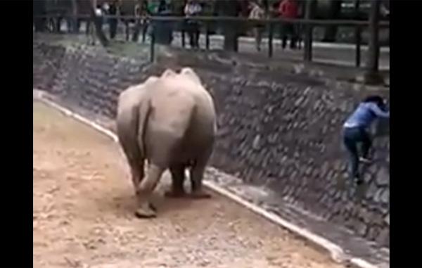 Para 'salvar' su celular se mete a la fosa del rinoceronte (VIDEO)